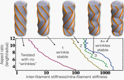 Cohesive filament bundles possessing single 5-fold defect.
